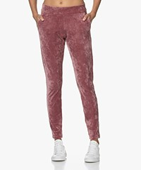 Woman by Earn Bobby Velvet Jersey Sweatpants - Dusty Pink