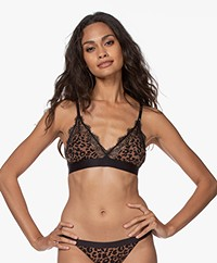 Love Stories Love Lace Bralette - Leopard