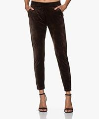Woman by Earn Bobby Velvet Jersey Pants - Dark Brown