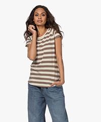 Closed Striped Raglan T-shirt - Chocolate Chip